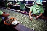 Peru, Piura, Norandino coffee factory