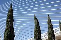 Cypress in front of Assut d´Or bridge. Valencia. Spain.