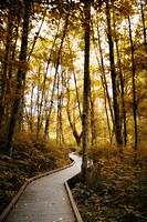 West Hylebos Wetlands in Federal Way, Washington, with a warm yellow tone.