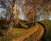 Country road. Suwalski region. Poland