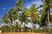 Beach huts among palm trees quiet Agonda Beach south Goa India.