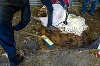 Europe. France. Bouches-du Rhone. Sheep shearing.