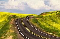 Rural highway through a canola field in the Palouse, eastern Washington, USA.