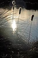 Backlit, aquatic plants