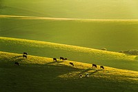 Spring evening on the South Downs near Brighton, East Sussex, England.