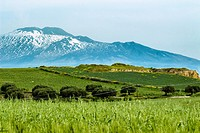 The wheat field under the volcano Etna in Sicily - Italy.