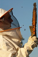 Beekeeper working with hives. Zafra, Badajoz province, Extremadura, Spain