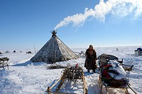 Nenets woman looking for willow (Salix genus) used as firewood at her camp on the tundra, Yar-Sale district. Yamal, Northwest Siberia, Russia.