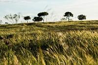 Mestanza. Valle de Alcudia y Sierra Madrona Natural Park, Ciudad Real province, Castile La Mancha, Spain.