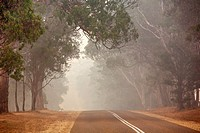 Smoke haze from 2006 bushfires in Gippsland, Victoria, Australia. This was the longest running bushfire in Australia´s History.