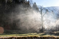 Sun Rays Breaking through Trees in the Salzkammergut Cultural Heritage Region, Austria