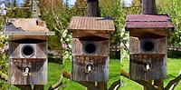 Image left:.Starling nest box (Sturnus vulgaris) was looted at night by a Stone Marten or Beech Marten (Martes foina). The marten has eaten a hole int...