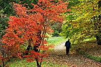 Winkworth Arboretum. National Trust. Godalming. Surrey. England.