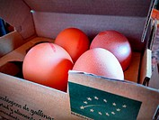 Organic eggs in a box, identified with the European organic label