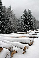 Pile of wood waiting to be transported, winter, Poland.