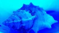 Shell behind the blue crystal. Estremadura