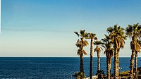 Catania - Italy. The autumn palm trees on the background of sky and sea.