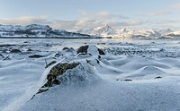 Landscape with seaweed near Leknes, island Vestvagoy. The Lofoten islands in northern Norway during winter. Europe, Scandinavia, Norway, February.