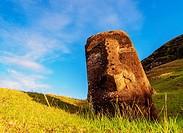 Moai at the quarry on the slope of the Rano Raraku Volcano at sunrise, Rapa Nui National Park, Easter Island, Chile.