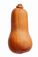 Butternut squash (Cucurbita moschata Butternut). Called Butternut pumpkin also. Image of single squash isolated on white background.