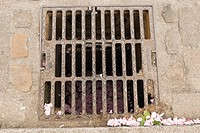 May blossom petals blown into a large street drain, with metal grill mouldings matching the form of the petals, Cambrai, France.
