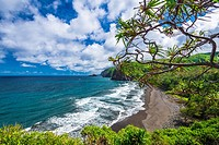 Pololu Valley and beach through hala trees, North Kohala, The Big Island, Hawaii USA.