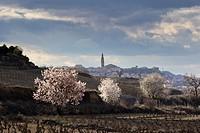 Briones wine scape in spring time, La Rioja wine region, Spain, Europe.