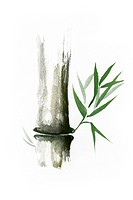 Beautiful Zen painting of bamboo stalk with green leaves. Sumi-e Chinese Japanese black ink illustration isolated on white background.