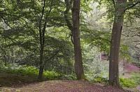 Forest of Rambouillet, Haute Vallee de Chevreuse Regional Natural Park, Yvelines department, Ile-de-France region, France, Europe.
