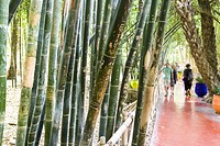The Majorelle Garden is most beautiful landscape garden of city. Marrakech, Marrakech-Safi. Morocco.