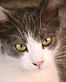 Cyprus cat in Nicosia