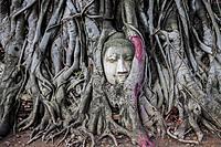 Buddha head in banyan tree roots at Wat Mahathat temple, in Ayutthaya, Thailand.