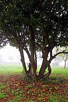 fog in the garden, Girona, Catalonia, Spain