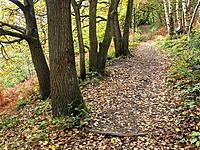 Path through Spring Wood in Nidd Gorge Woods in Autumn Knaresborough North Yorkshire England.