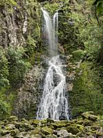 Paranui Falls, also known as Pukenui Falls, is located at A. H. Reed Memorial Park, Whangarei. Northland, New Zealand.