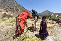 Women working on terraced fields, Al Hajir, Oman.