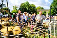 Farmers at the Wilton Sheep sales in Wiltshire, England.