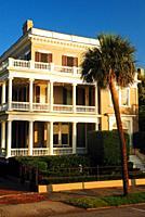 Porch and Palmetto, Charleston, South Carolina.