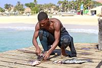 Local fisherman gutting and cleaning freshly caught fish on the pier at Santa Maria, Sal Island, Salina, Cape Verde, Africa.
