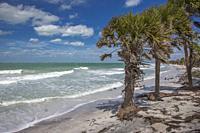 Wild uninhabited shore of Egmont Key State Park on the Gulf of Mexico on the west coast of Florida.