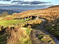 Sunlight on moorland along the Bronte Way on Haworth Moor near Haworth West Yorkshire England.