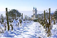 Vineyard and the Clock Tower of the Royal Fortress of Chinon in Winter. Indre-et-Loire, Central Region, Loire Valley, France, Europe.