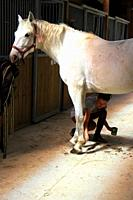 Girl taking care of her horse, Provence, France.