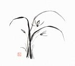 Wild orchid flowers Japanese Sumi-e Zen black ink painting illustration on rice paper white background.