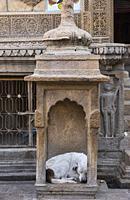 Improvised doghouse, Jaisalmer, Rajasthan, India.