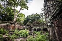 Jungle growing over Preah Khan temple, Angkor Complex (Siem Reap Province, Cambodia).