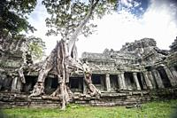 A tree roots growing over the Preah Khan temple, Angkor Complex (Siem Reap Province, Cambodia).