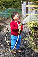 Jiand LIN, aged 2 years, watering his fathers allotment by using a hose, Kilwinning, Ayrshire, Scotland.