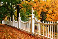 Autumn leaves are framed by a white picket fence.