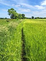 Footpath along the edge of a barley field at Hay a Park near Knaresborough North Yorkshire England.
